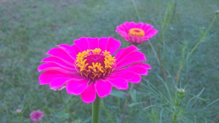 The Beauty in My Garden